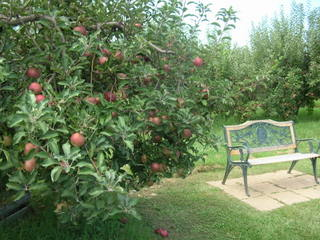 Apple and Bench