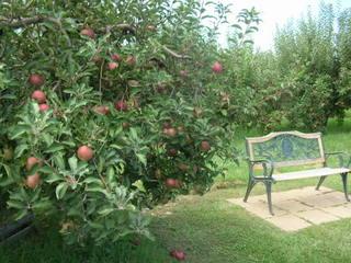 Bench at apple tree