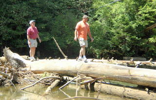 Swinging Bridge Log Walk